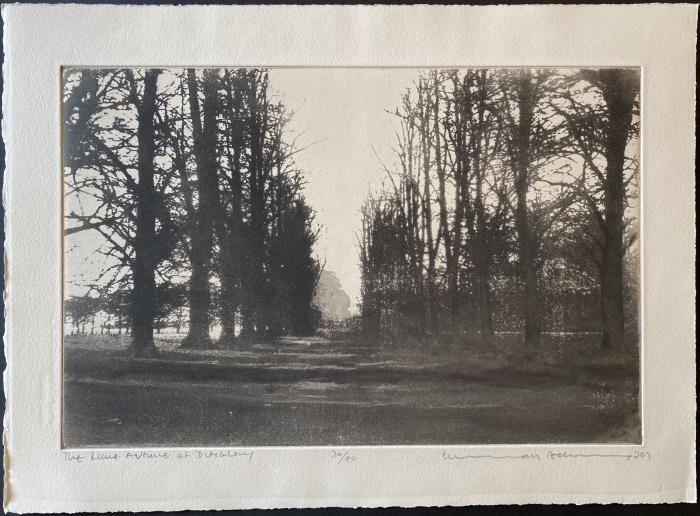 The Lime Avenue, Ditchley